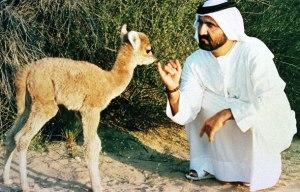 sheikh-mohammed-desert